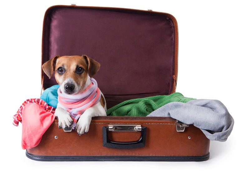 Hund liegt in braunem Reisekoffer