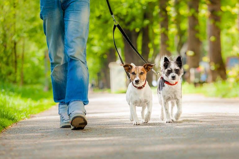 Frau übt Leinenführigkeit mit zwei Hunden