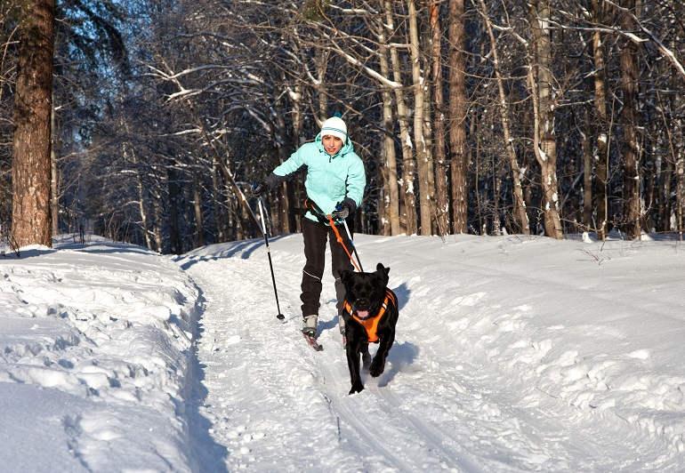 Frau und Hund beim Skijöring