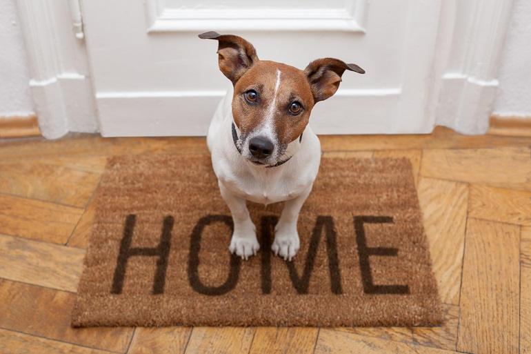 Jack Russell sitzt vor der Haustür auf einer Fußmatte mit der Aufschrift Home