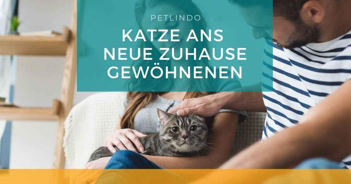 Katze An Neue Besitzer Gewöhnen