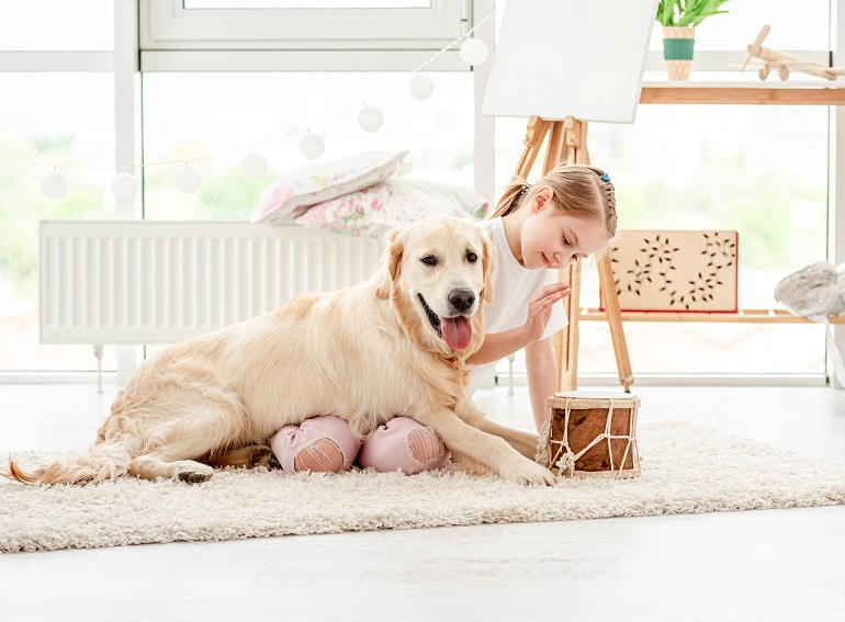 Kleines Mädchen spielt mit Golden Retriever
